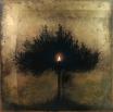 Christos Bokoros : http://www.bokoros.gr/index.php?l=en  Olive tree shadow
