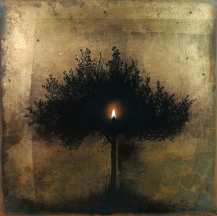 Olive tree shadow